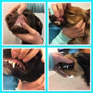 tanden poetsen hond